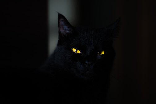 scary black cat